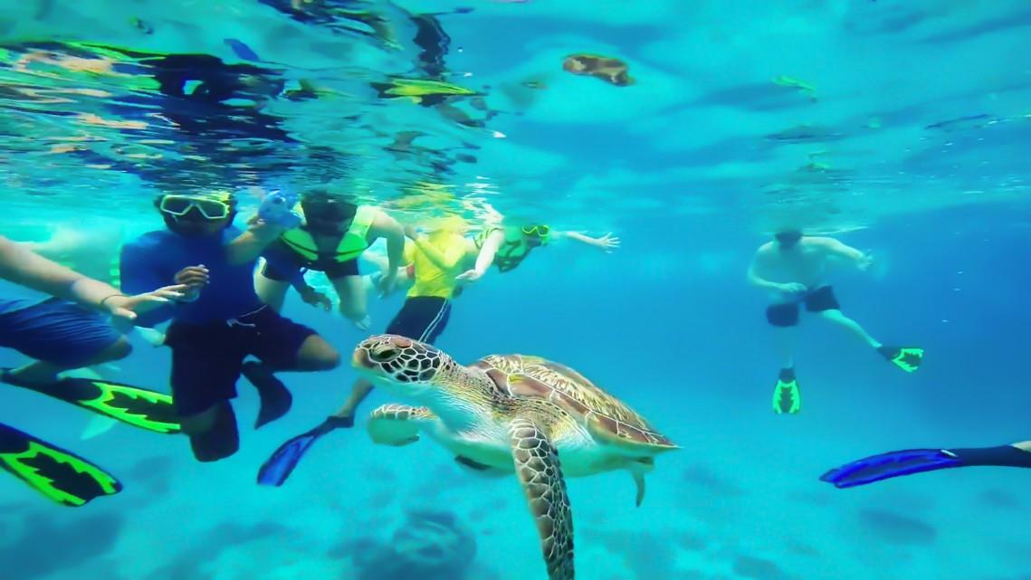 nager avec tortue de mer