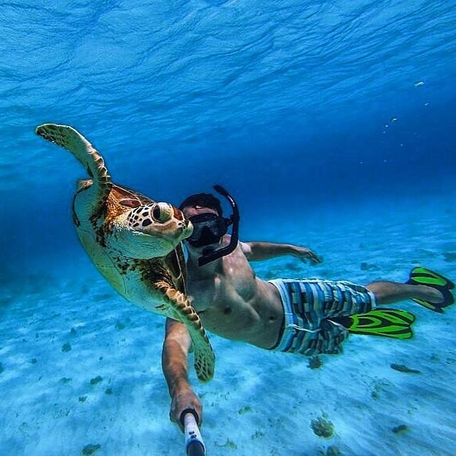 plongée en groupe avec tortue